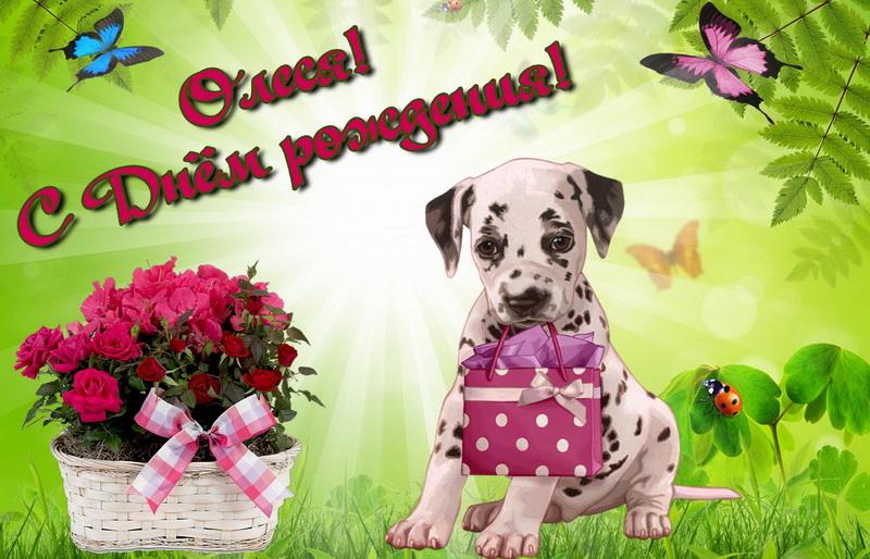 Открытка с днем рождения девушке олеся, шариков открытку поздравление