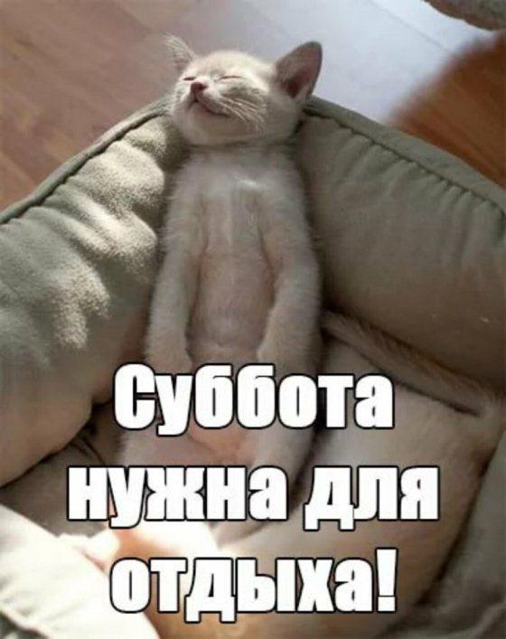 Суббота смешные картинки, сне