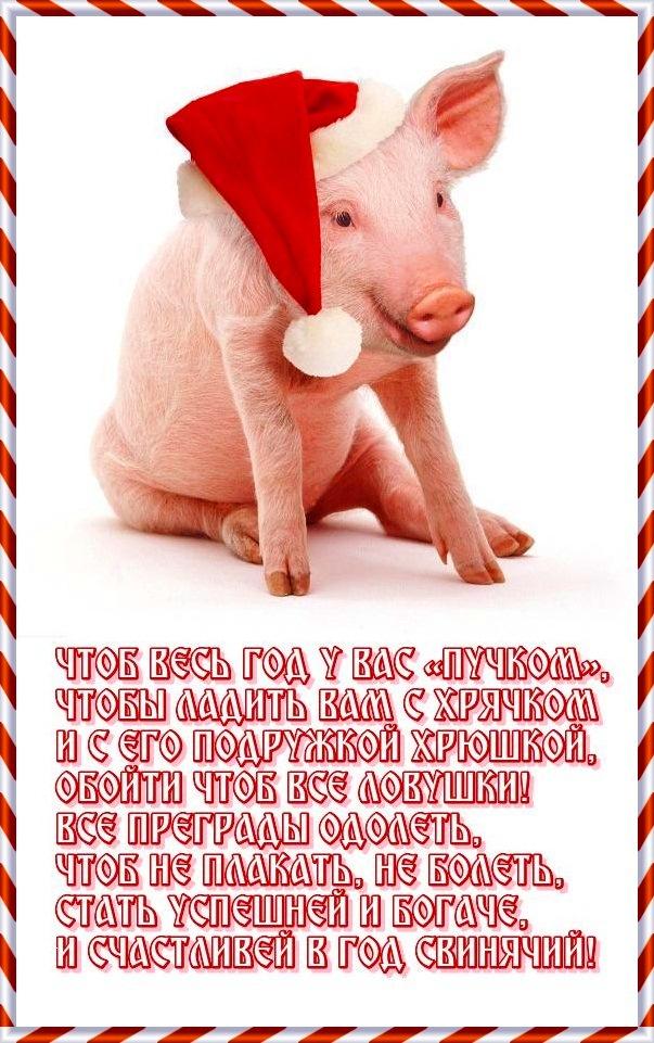 Открытки с поздравлениями нового года свиньи