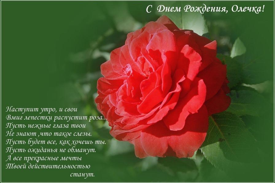 Оля с днём рождения поздравления стихи 67
