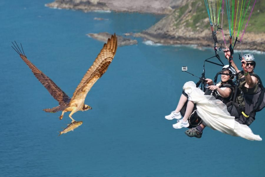 фото приколы парашют