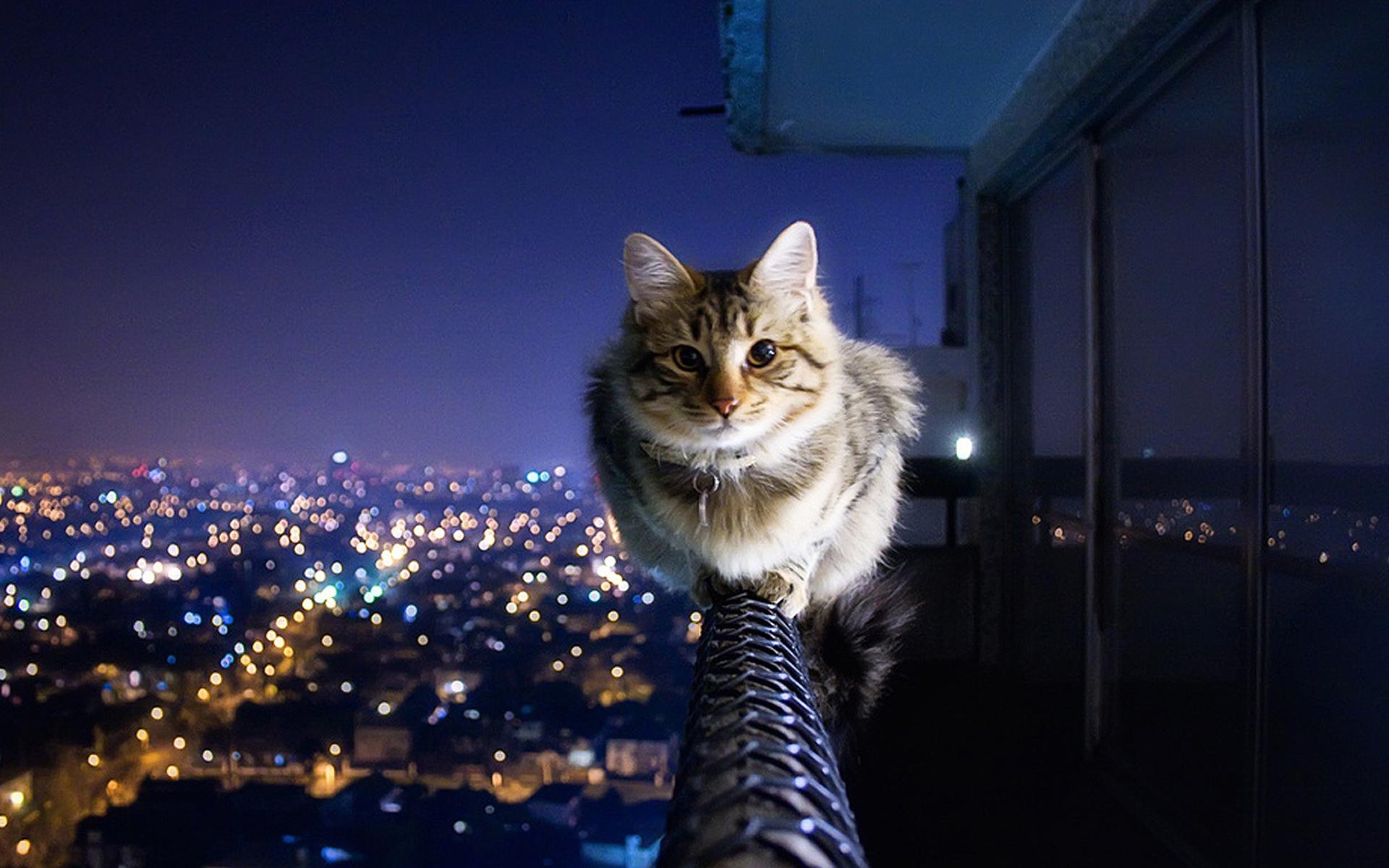 Картинки коты и город