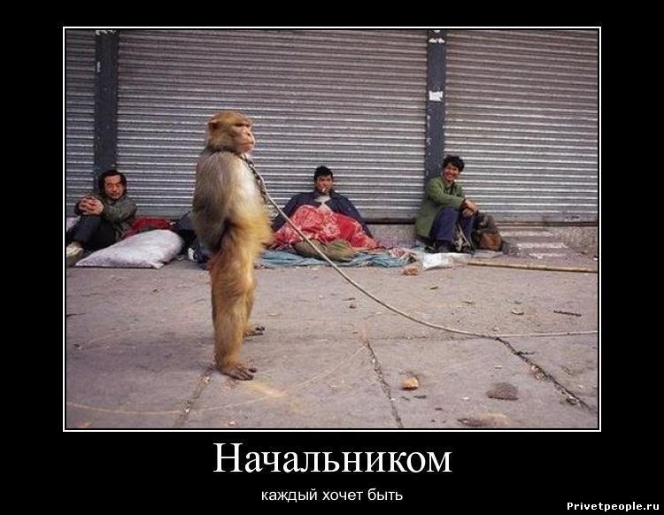 Каждая обезьяна хочет быть начальником