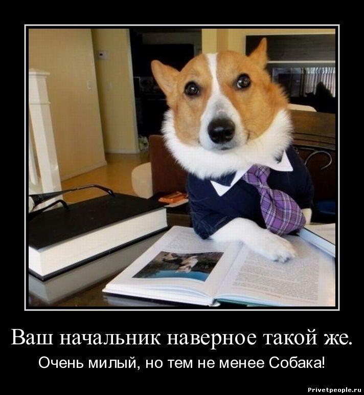 Ваш начальник наверное такой же. Очень милый, но тем не менее собака!