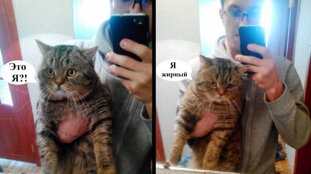 Смешное селфи котов и кошек (50 фотографий)