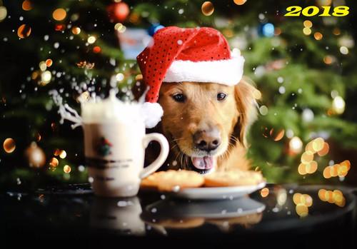 Собака в новогодней шапке, обои 2000px × 1394px