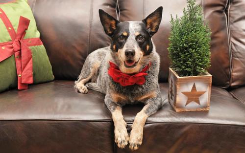 Собака на кожаном диване, обои 1920px × 1200px