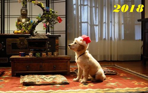 Собака в Японии 1280px × 800px