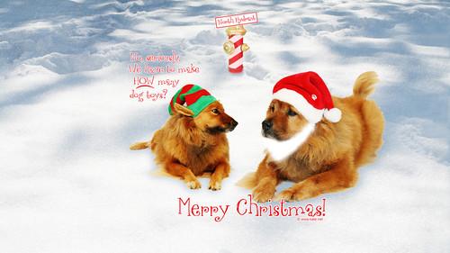 Обои с Рождеством 2018 с собаками 1366px × 768px