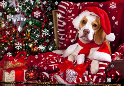 Собака, елка и снежинки, обои 1125px × 783px