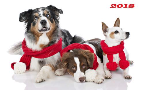 Три собаки 2018 год 2000px × 1250px