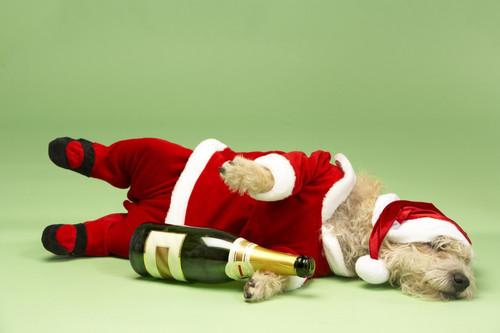 Спящая собака с бутылкой в костюме, 1024px × 682px