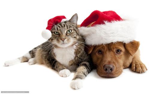 Новогодние обои, кошка и собака, 1 600px × 1 000px