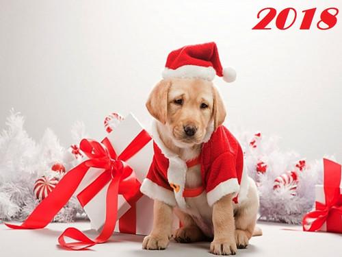 Грустный пес с подарком 1024px × 768px
