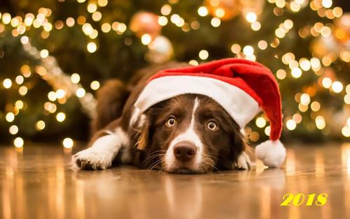Лежачий пес в новгодней шапке 1920px × 1207px