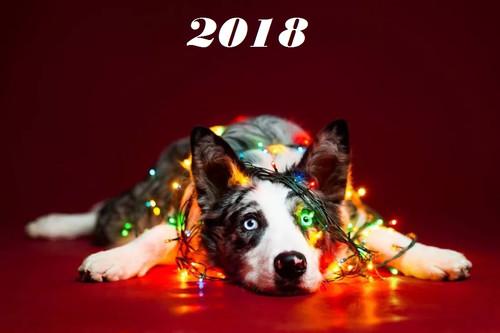 Лежачая собака в гирляндах 1100px × 733px