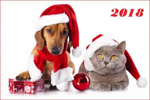 Собака и кот, новогодние обои 2018 год 1200px × 800px