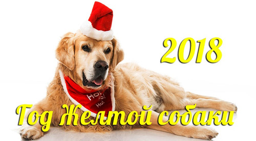 Желтая собака 201 год 850px × 470px