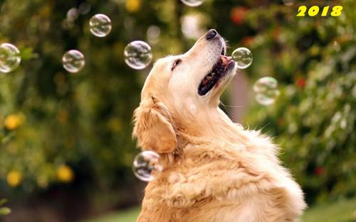 Собака, елка и мыльные пузыри, обои 2000px × 1250px