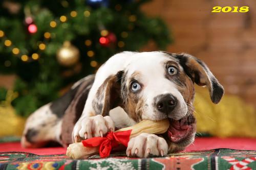 Собака с новогодней косточкой, обои 2000px × 1333px