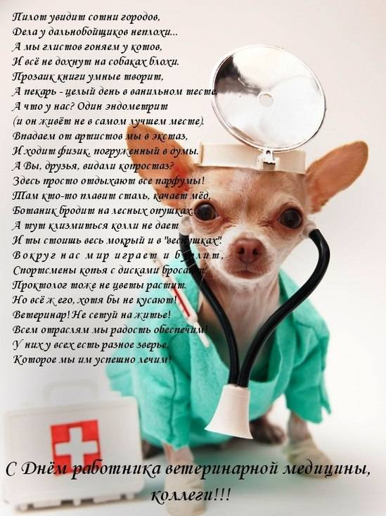 31 августа день ветеринарного работника поздравления с