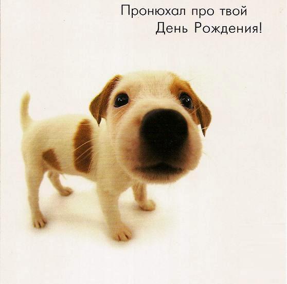 прикольные открытки на день рождения с собакой гордятся успехами сына