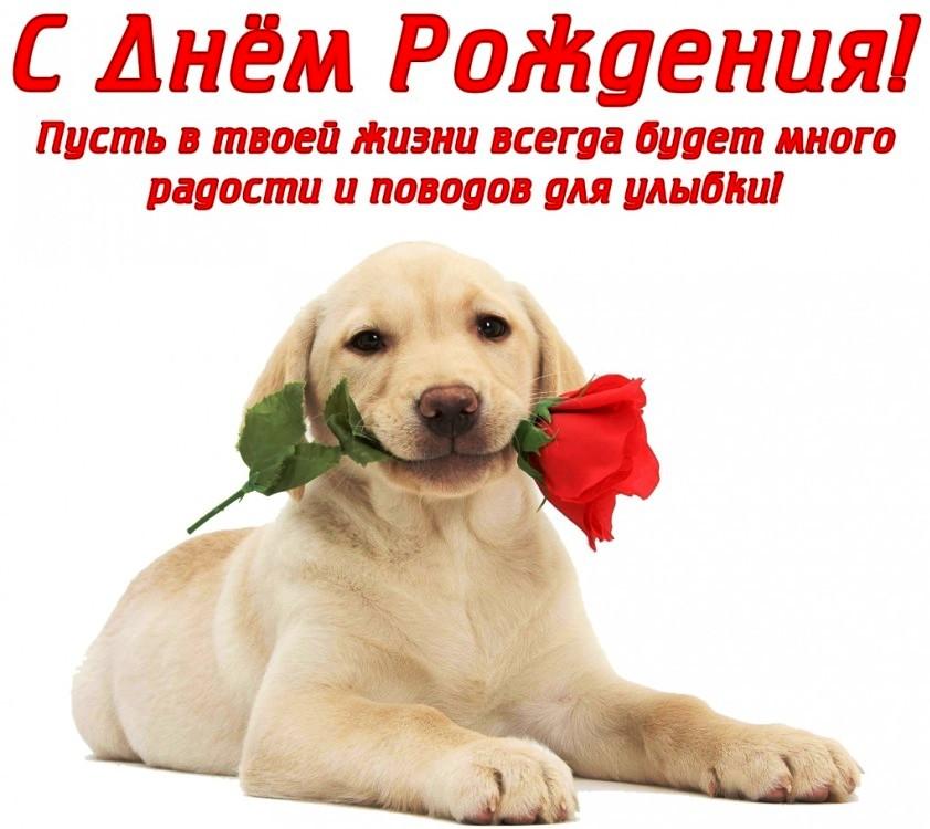 С днем рождения открытки с собаками красивые