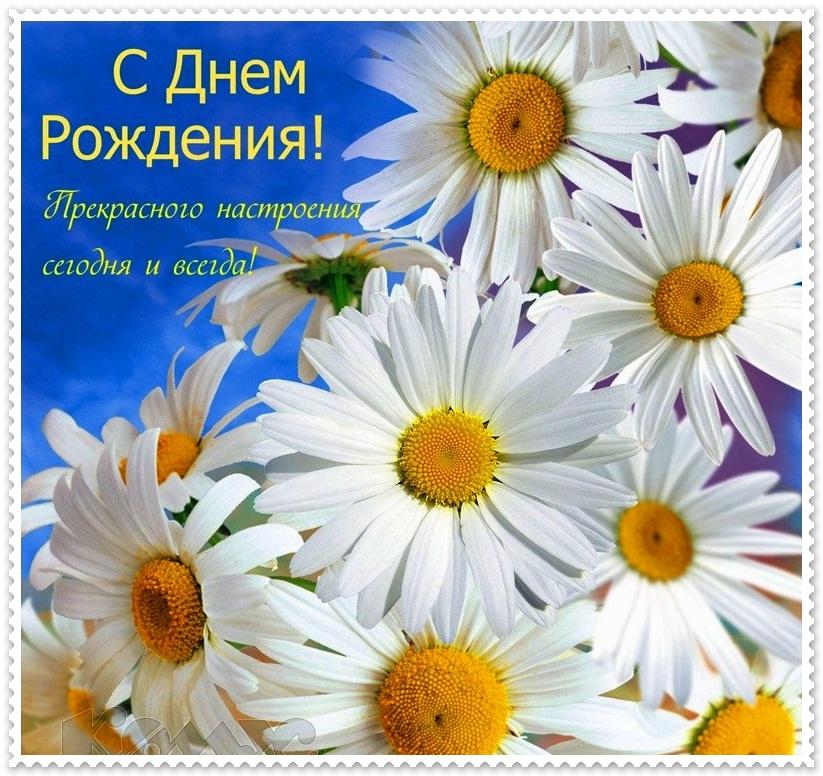 Ромашки цветы открытки с днем рождения