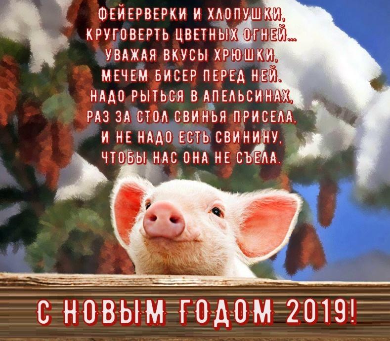 поздравления с новым годом коллег со свиньей днем рождения антону