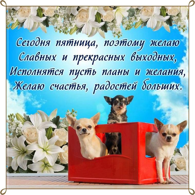 Картинки с окончанием недели пятница, открыток для малышей