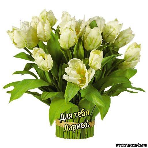 Цветы ларисе