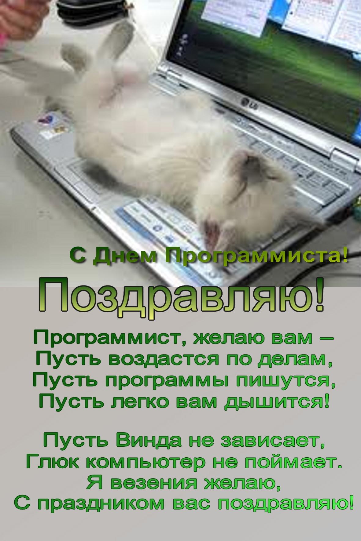 Поздравления программисту открытки