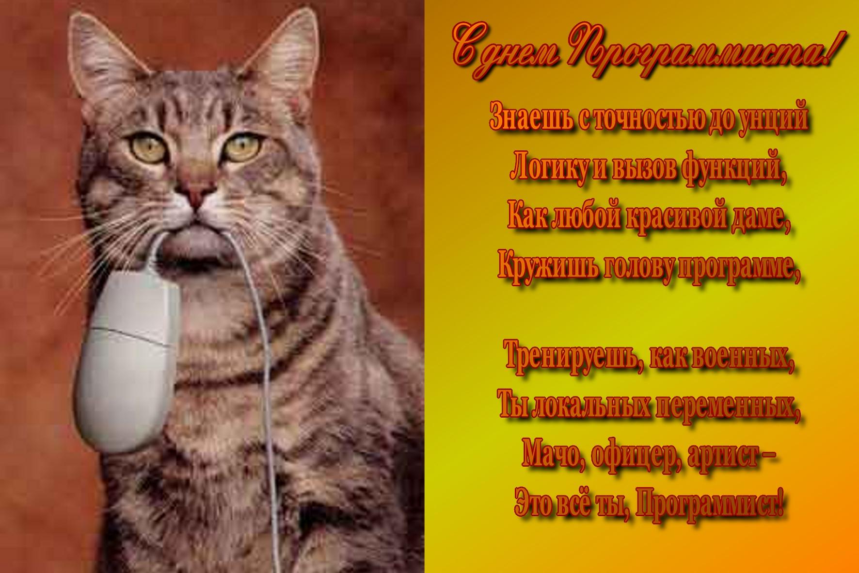 Стихи к подарку кошек 988